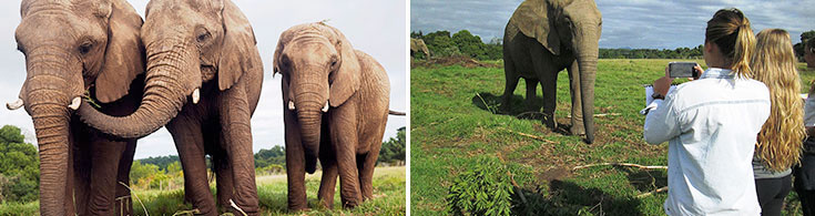 Elephant-volunteer-programme